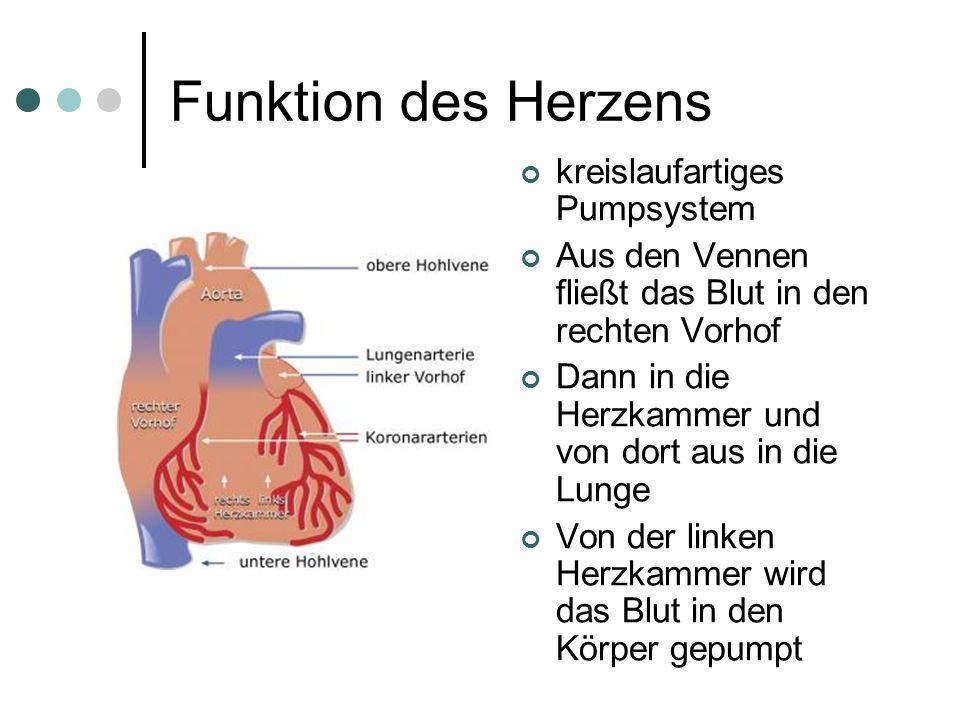 Funktion des Herzens kreislaufartiges Pumpsystem Aus den Vennen fließt das Blut in den rechten Vorhof Dann in die Herzkammer und von dort aus in die L
