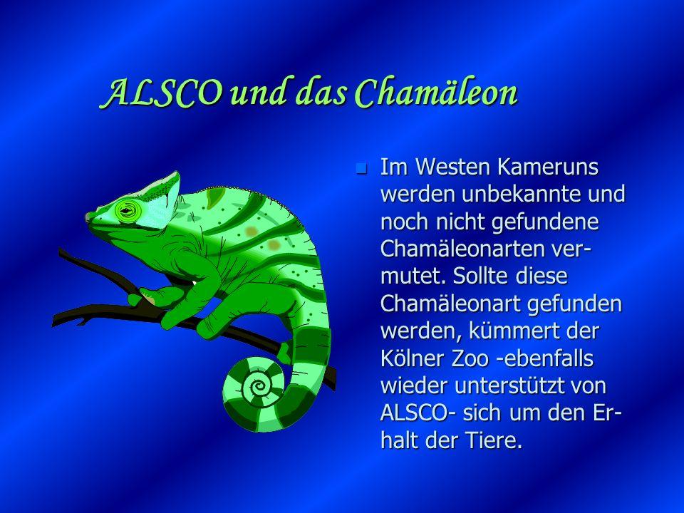 ALSCO und das Chamäleon nInIm Westen Kameruns werden unbekannte und noch nicht gefundene Chamäleonarten ver- mutet.