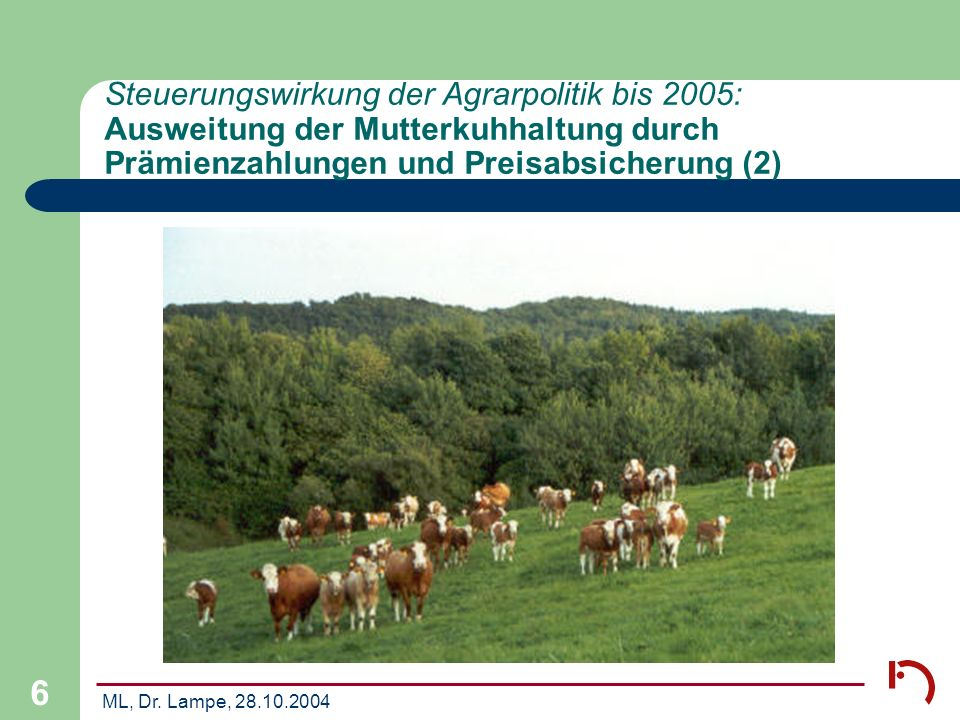 ML, Dr. Lampe, 28.10.2004 6 Steuerungswirkung der Agrarpolitik bis 2005: Ausweitung der Mutterkuhhaltung durch Prämienzahlungen und Preisabsicherung (