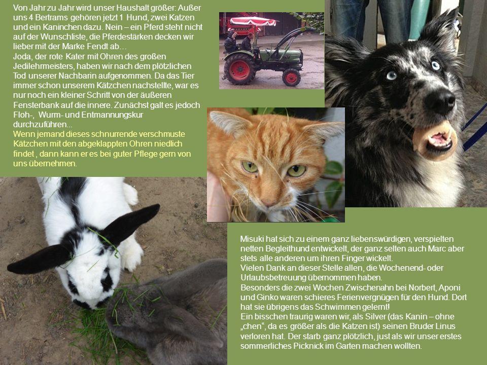 Von Jahr zu Jahr wird unser Haushalt größer: Außer uns 4 Bertrams gehören jetzt 1 Hund, zwei Katzen und ein Kaninchen dazu. Nein – ein Pferd steht nic
