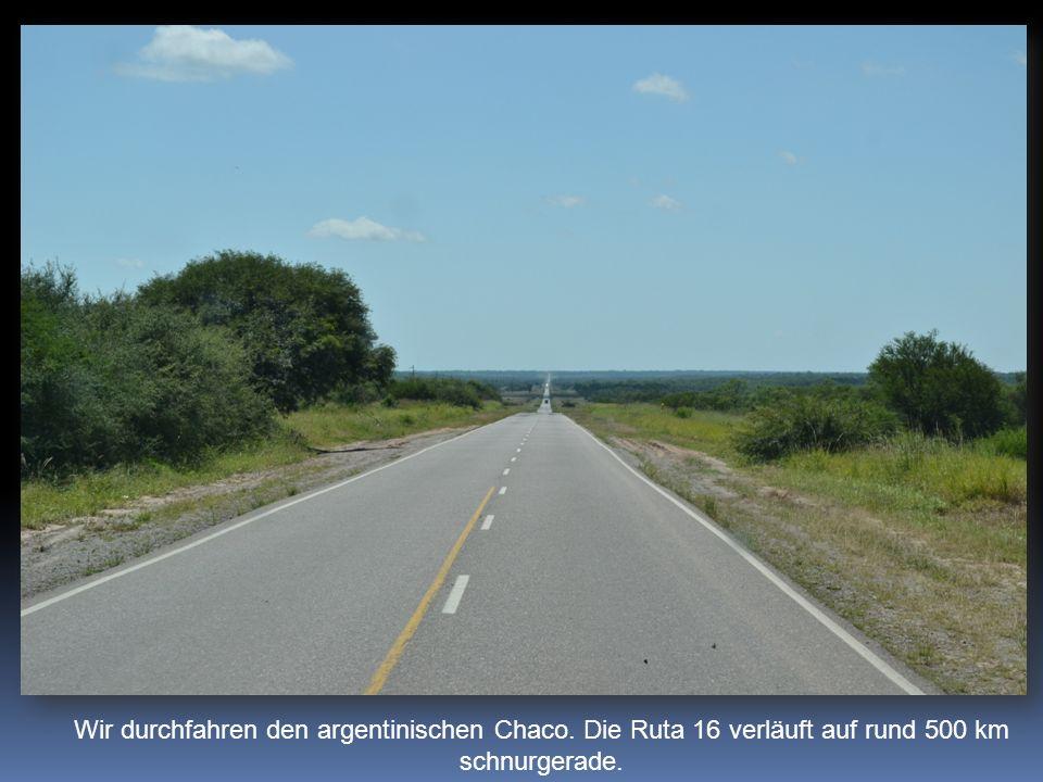 Wir durchfahren den argentinischen Chaco. Die Ruta 16 verläuft auf rund 500 km schnurgerade.