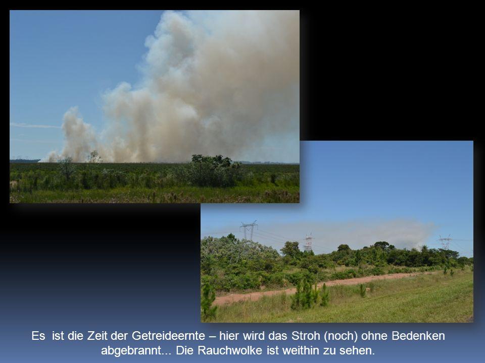 Es ist die Zeit der Getreideernte – hier wird das Stroh (noch) ohne Bedenken abgebrannt... Die Rauchwolke ist weithin zu sehen.