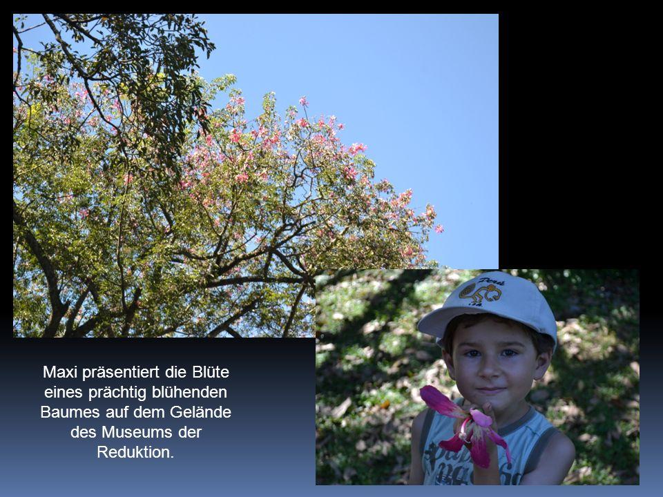 Maxi präsentiert die Blüte eines prächtig blühenden Baumes auf dem Gelände des Museums der Reduktion.