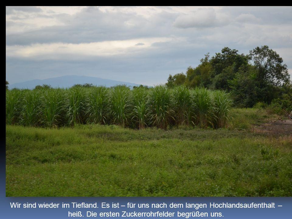 Wir sind wieder im Tiefland. Es ist – für uns nach dem langen Hochlandsaufenthalt – heiß. Die ersten Zuckerrohrfelder begrüßen uns.