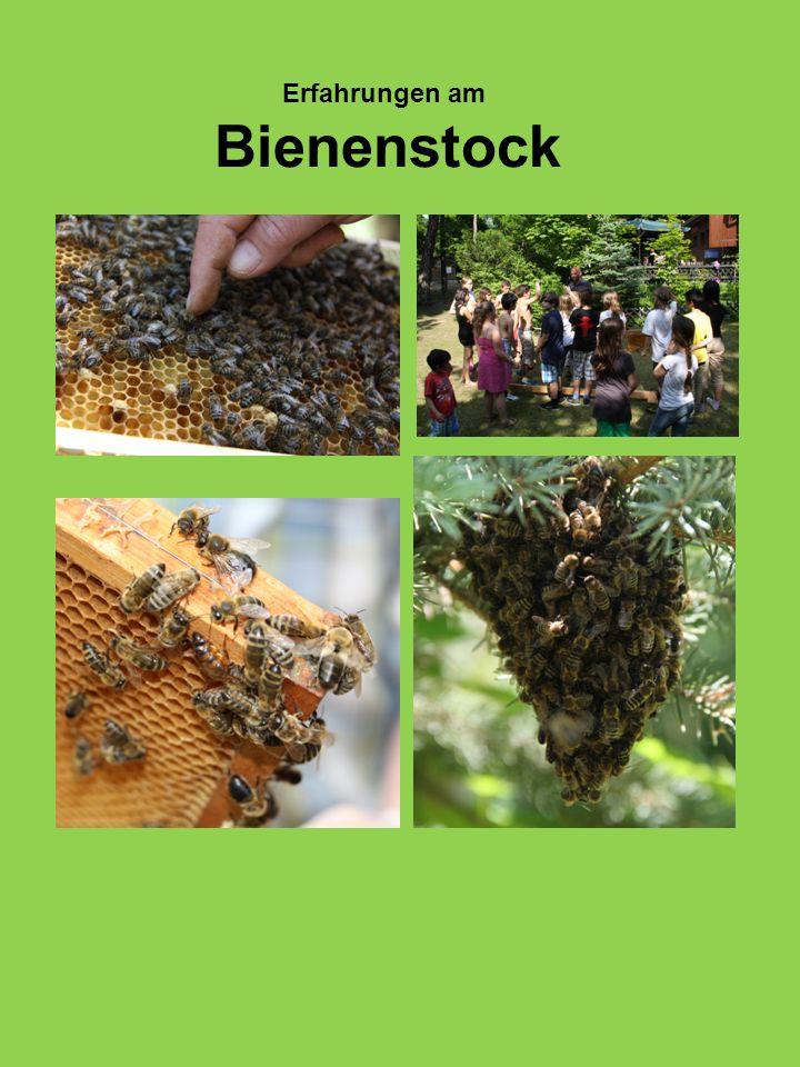 Erfahrungen am Bienenstock