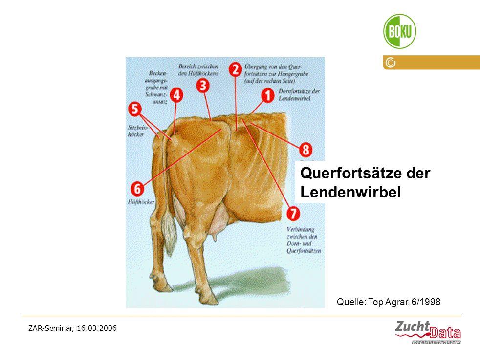 ZAR-Seminar, 16.03.2006 Querfortsätze der Lendenwirbel Quelle: Top Agrar, 6/1998