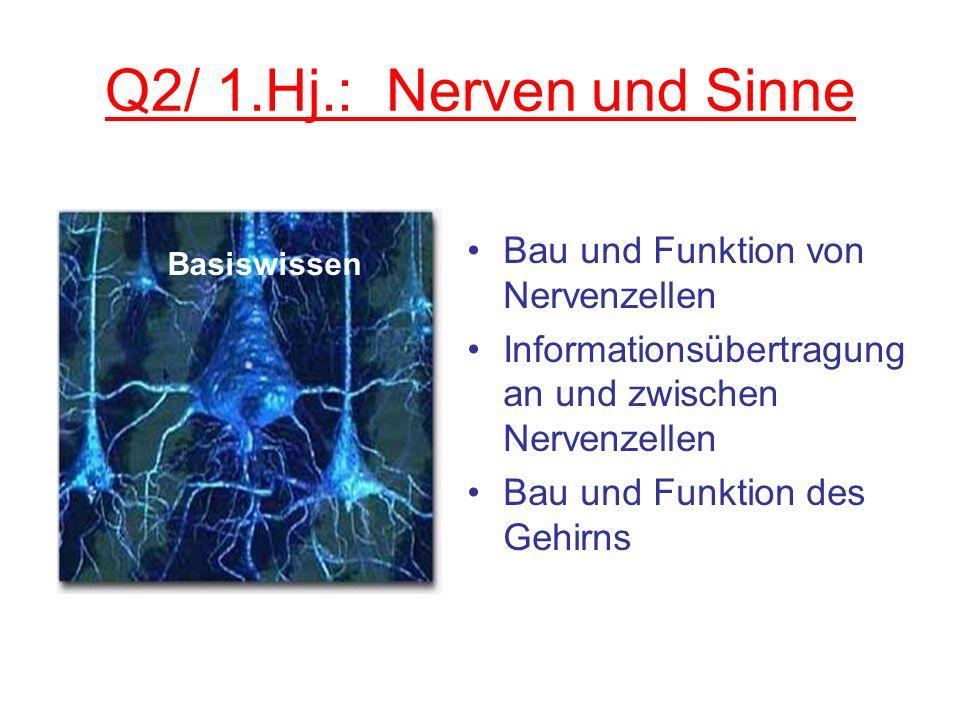 Q2/ 1.Hj.: Nerven und Sinne Bau und Funktion von Nervenzellen Informationsübertragung an und zwischen Nervenzellen Bau und Funktion des Gehirns Basisw