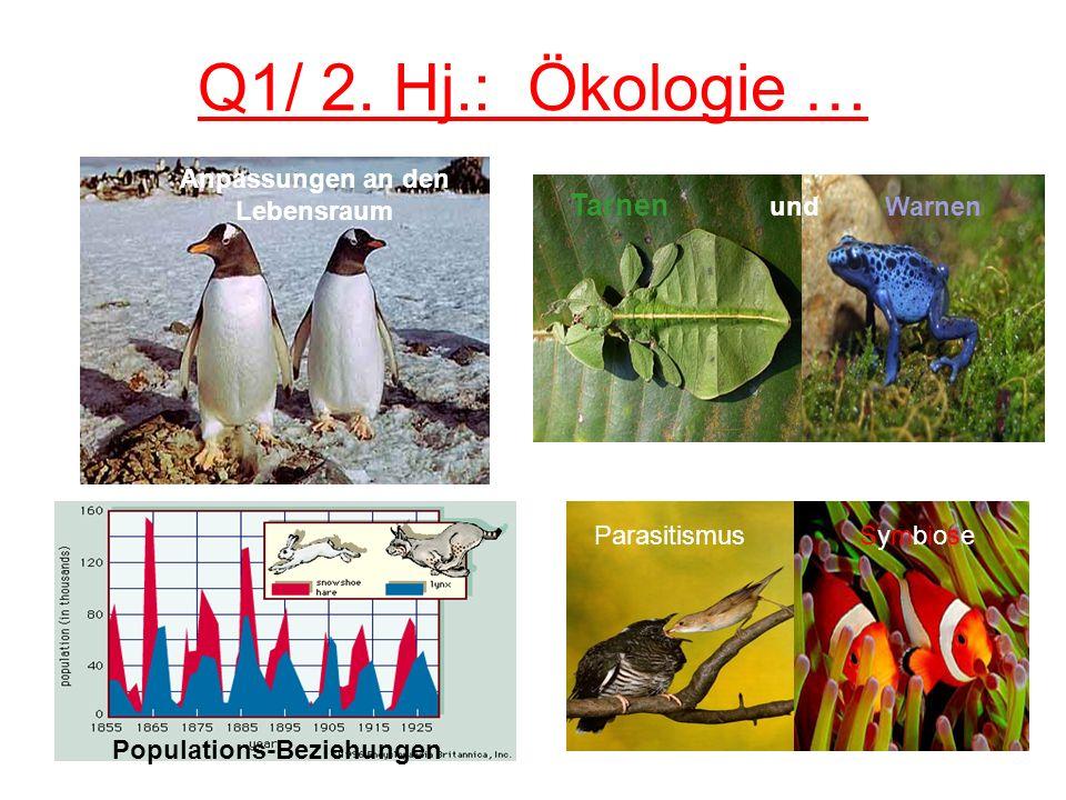 Q1/ 2. Hj.: Ökologie … Anpassungen an den Lebensraum Populations-Beziehungen Tarnen und Warnen Parasitismus Symbiose