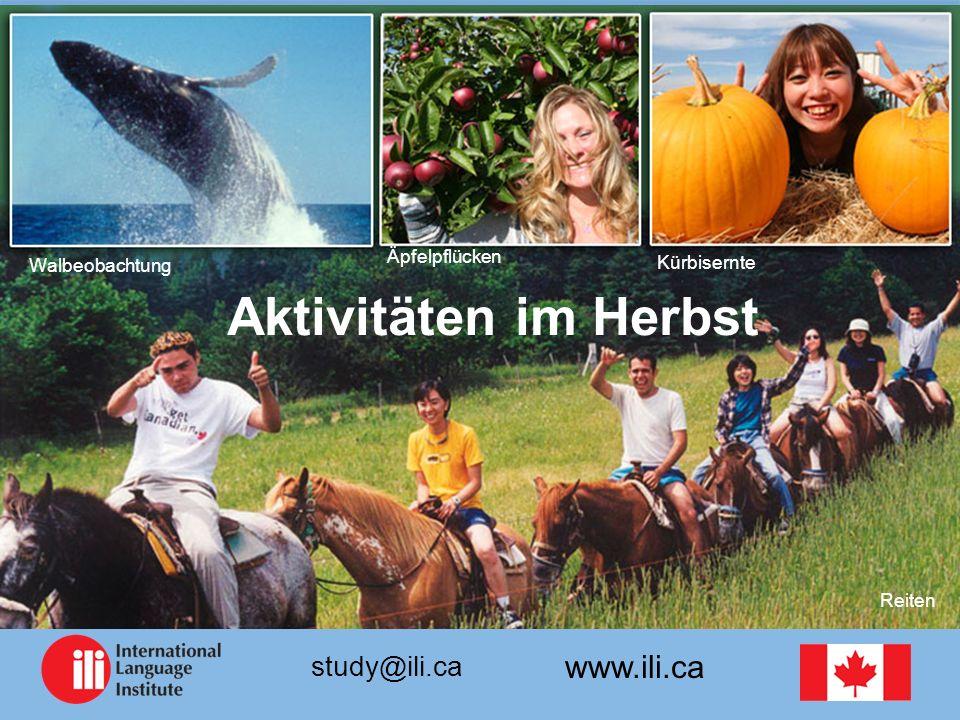 www.ili.ca study@ili.ca Walbeobachtung Aktivitäten im Herbst Äpfelpflücken Kürbisernte Reiten