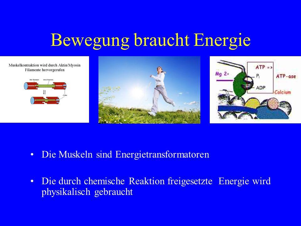 Bewegung braucht Energie Die Muskeln sind Energietransformatoren Die durch chemische Reaktion freigesetzte Energie wird physikalisch gebraucht
