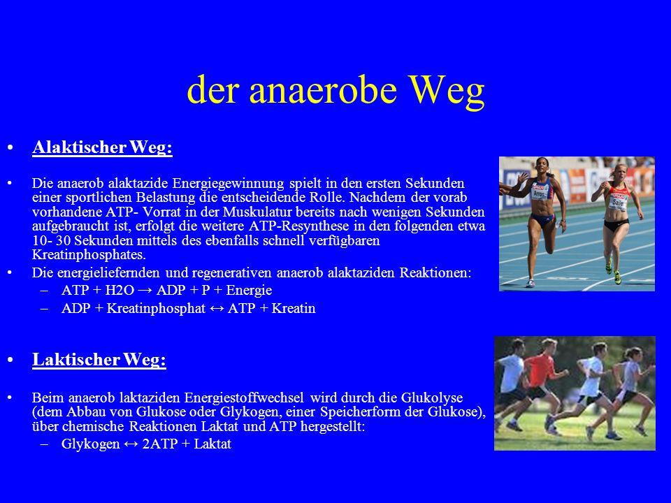 der anaerobe Weg Alaktischer Weg: Die anaerob alaktazide Energiegewinnung spielt in den ersten Sekunden einer sportlichen Belastung die entscheidende