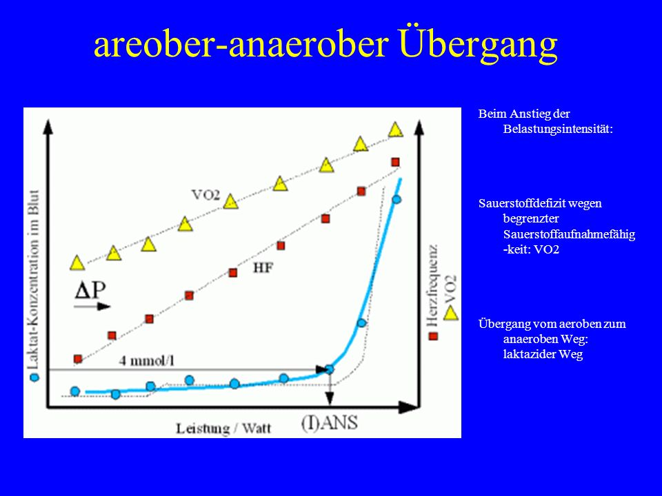 areober-anaerober Übergang Beim Anstieg der Belastungsintensität: Sauerstoffdefizit wegen begrenzter Sauerstoffaufnahmefähig -keit: VO2 Übergang vom a