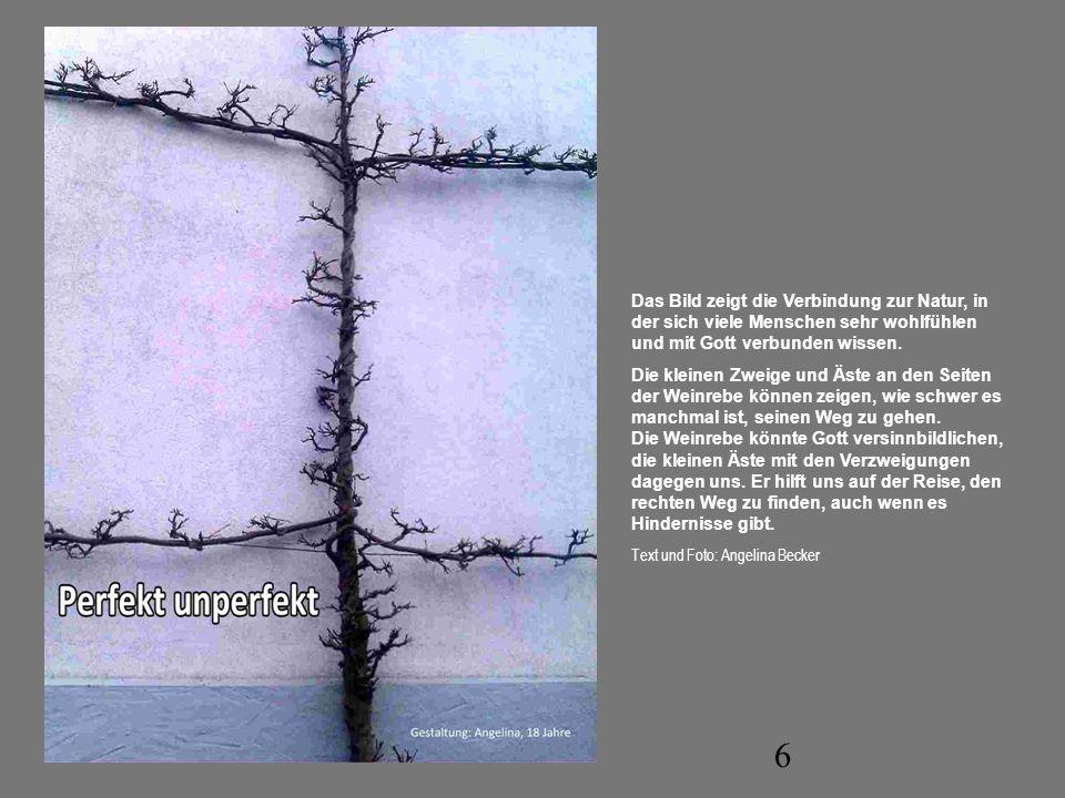 6 Das Bild zeigt die Verbindung zur Natur, in der sich viele Menschen sehr wohlfühlen und mit Gott verbunden wissen. Die kleinen Zweige und Äste an de