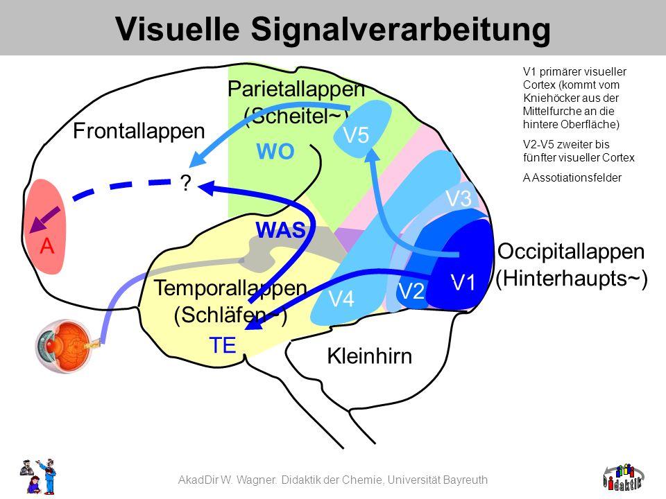 AkadDir W. Wagner. Didaktik der Chemie, Universität Bayreuth Visuelle Signalverarbeitung V1 primärer visueller Cortex (kommt vom Kniehöcker aus der Mi