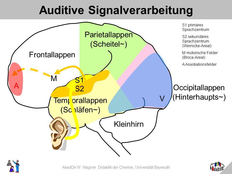 AkadDir W. Wagner. Didaktik der Chemie, Universität Bayreuth Auditive Signalverarbeitung S1 primäres Sprachzentrum S2 sekundäres Sprachzentrum (Wernic