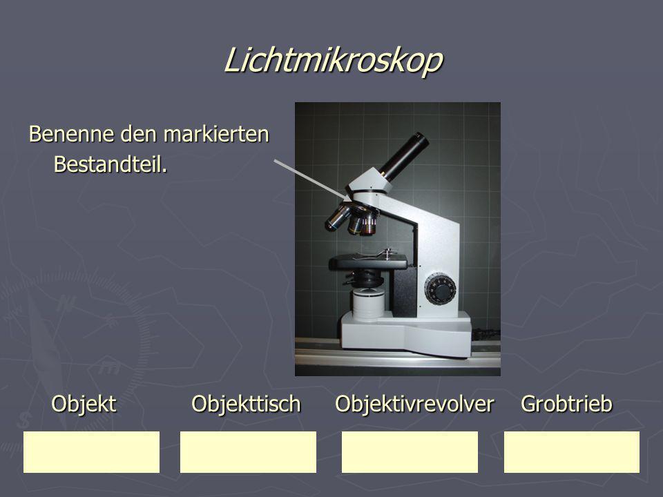 Lichtmikroskop Benenne den markierten Bestandteil. Objekt Objekttisch Objektivrevolver Grobtrieb Objekt Objekttisch Objektivrevolver Grobtrieb