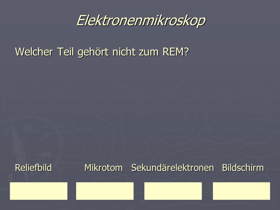 Elektronenmikroskop Welcher Teil gehört nicht zum REM? Reliefbild Mikrotom Sekundärelektronen Bildschirm