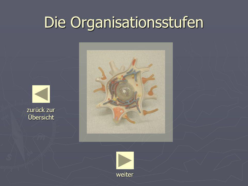 Die Organisationsstufen weiter zurück zur Übersicht zurück zur Übersicht
