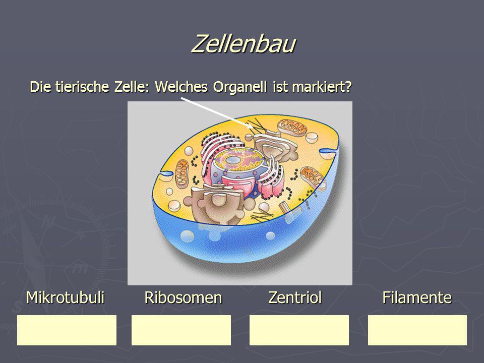 Zellenbau Die tierische Zelle: Welches Organell ist markiert? Mikrotubuli Ribosomen Zentriol Filamente