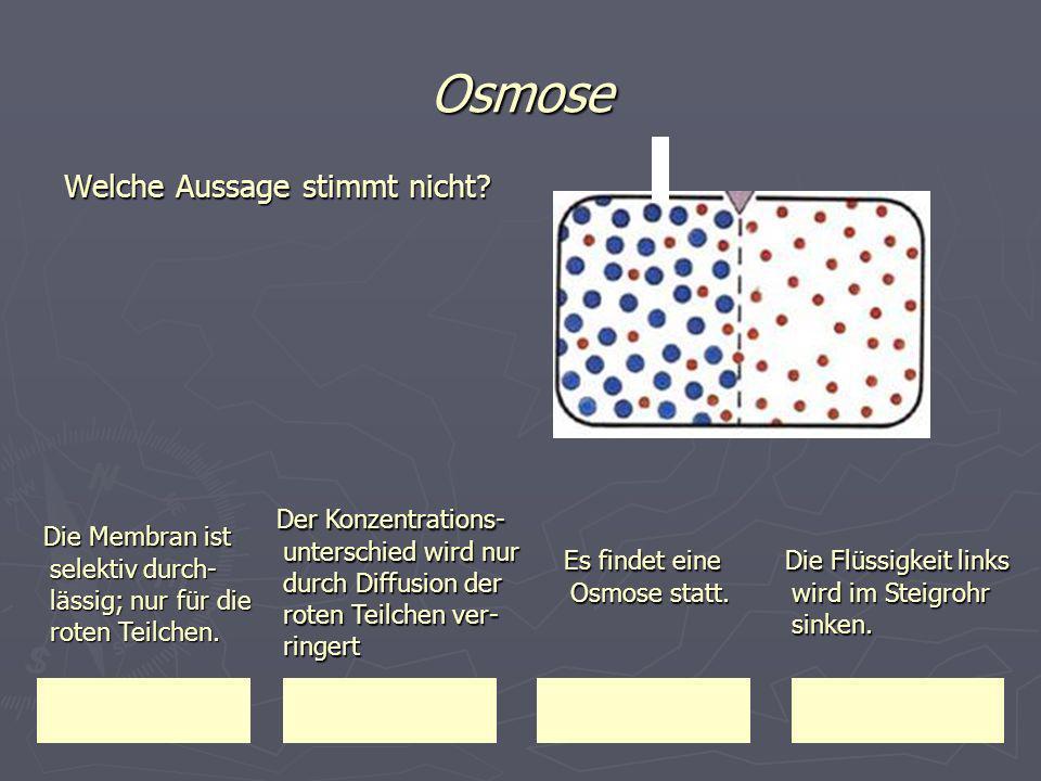 Osmose Welche Aussage stimmt nicht? Die Membran ist selektiv durch- lässig; nur für die roten Teilchen. Die Membran ist selektiv durch- lässig; nur fü