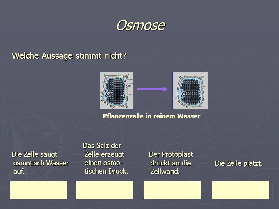 Osmose Welche Aussage stimmt nicht? Die Zelle saugt osmotisch Wasser auf. Die Zelle saugt osmotisch Wasser auf. Das Salz der Zelle erzeugt einen osmo-