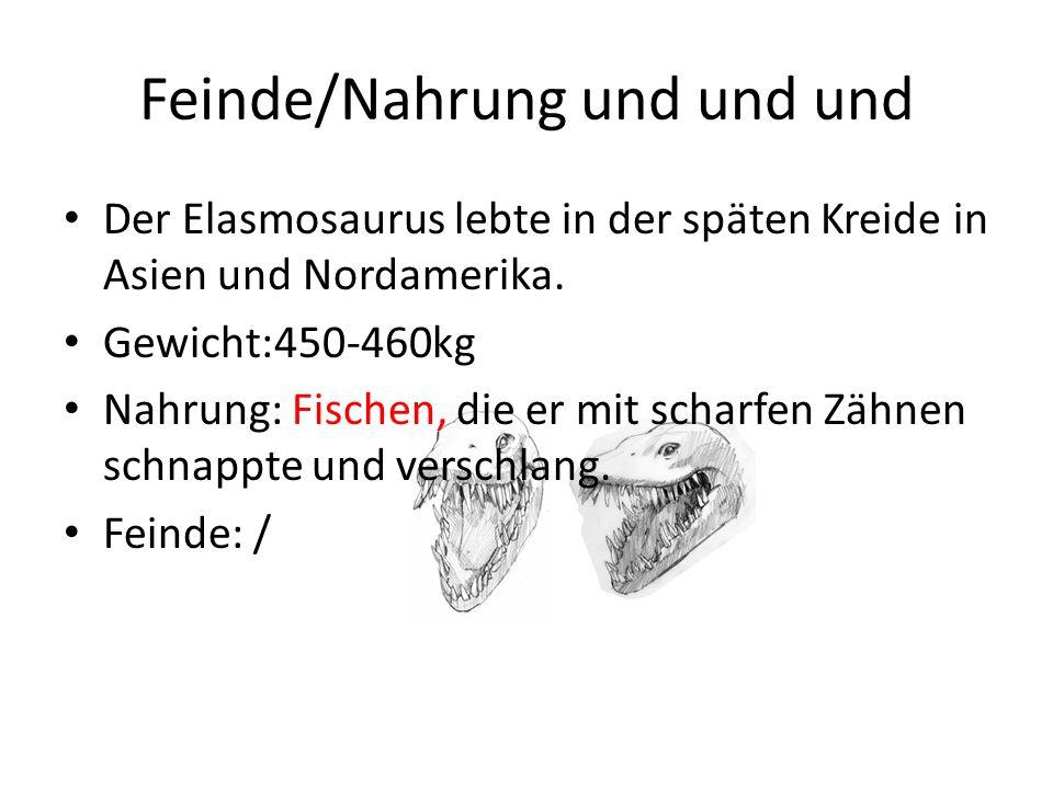 Präsentation Paddelsaurier Elasmosaurus