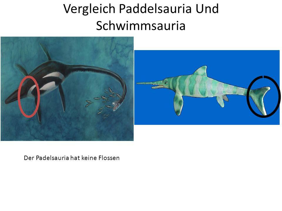 Der Elasmosaurus ist Nicht zu vergleichen mit Nessi Der E. Hat einen Langen Halts engegensatz Zu Nessi Dicker Körper Beim Elasmosaurus
