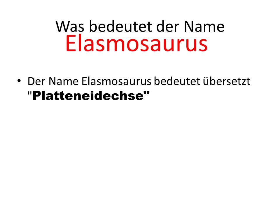 Vergleich Paddelsauria Und Schwimmsauria Der Padelsauria hat keine Flossen
