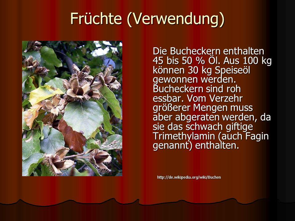 Früchte (Verwendung) Die Bucheckern enthalten 45 bis 50 % Öl. Aus 100 kg können 30 kg Speiseöl gewonnen werden. Bucheckern sind roh essbar. Vom Verzeh