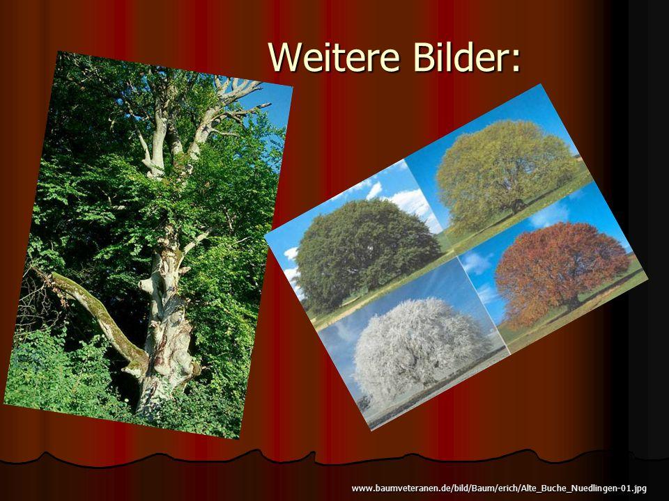 Weitere Bilder: www.baumveteranen.de/bild/Baum/erich/Alte_Buche_Nuedlingen-01.jpg