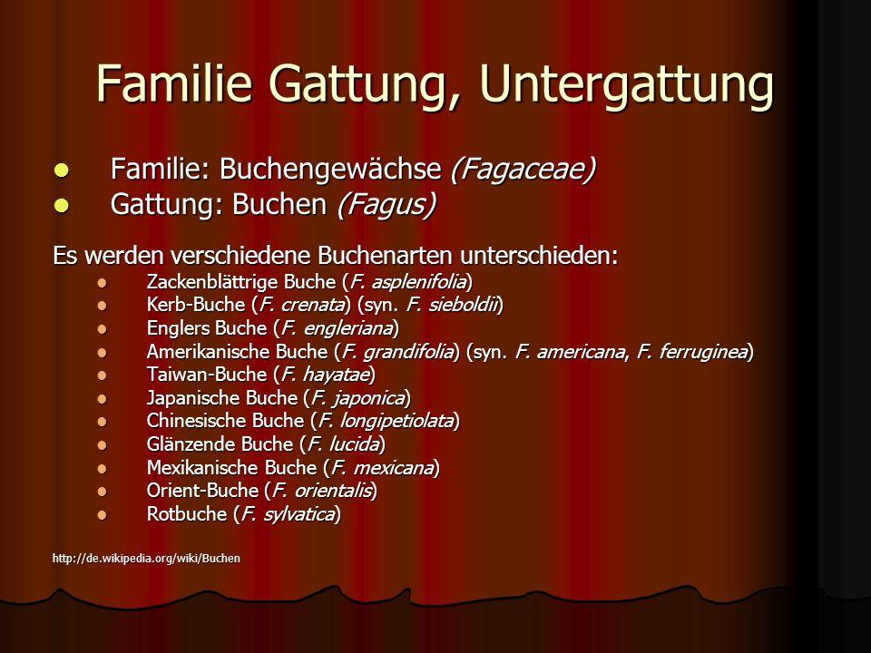 Familie Gattung, Untergattung Familie: Buchengewächse (Fagaceae) Familie: Buchengewächse (Fagaceae) Gattung: Buchen (Fagus) Gattung: Buchen (Fagus) Es