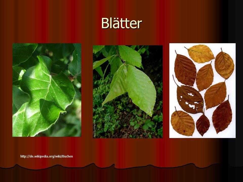 Blätter http://de.wikipedia.org/wiki/Buchen