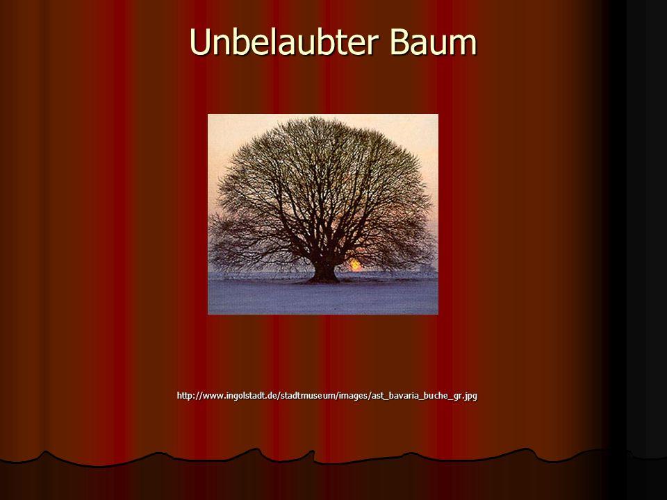 Unbelaubter Baum http://www.ingolstadt.de/stadtmuseum/images/ast_bavaria_buche_gr.jpg