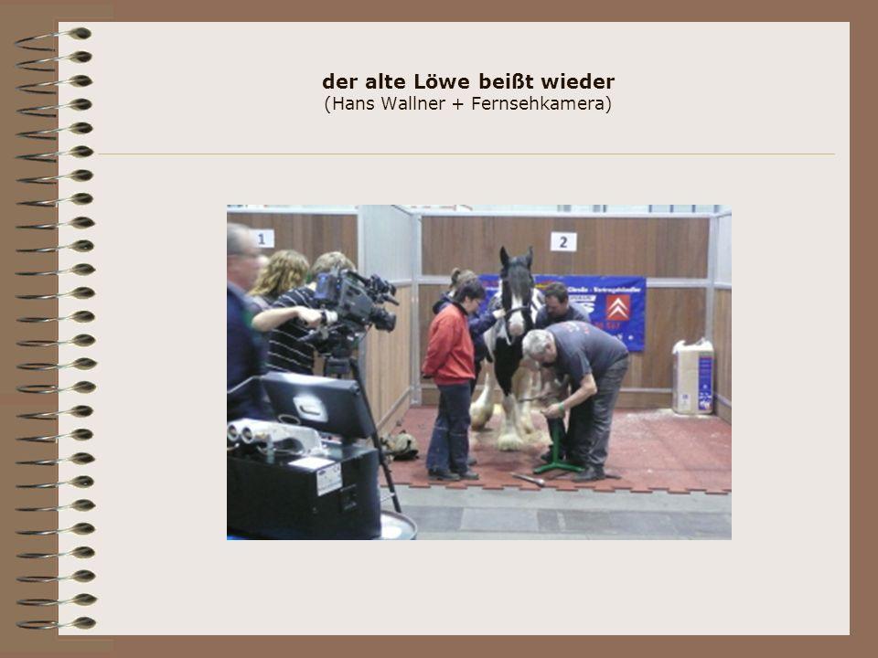 der alte Löwe beißt wieder (Hans Wallner + Fernsehkamera)