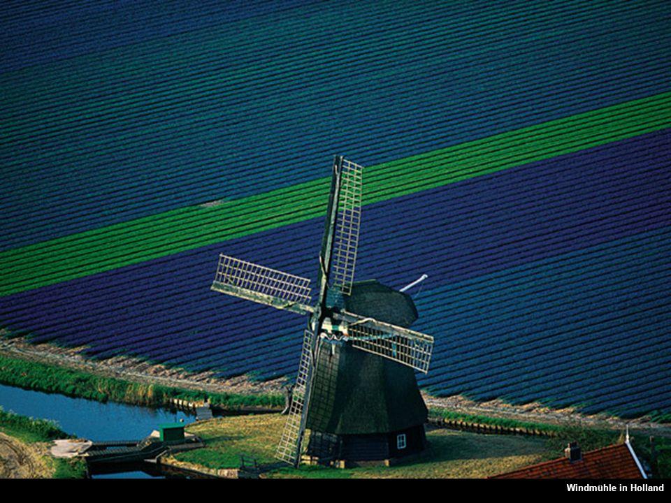 Molino en medio de los campos, Países BajosWindmühle in Holland