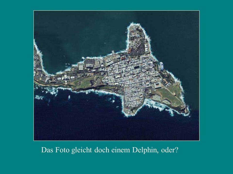 Das Foto gleicht doch einem Delphin, oder