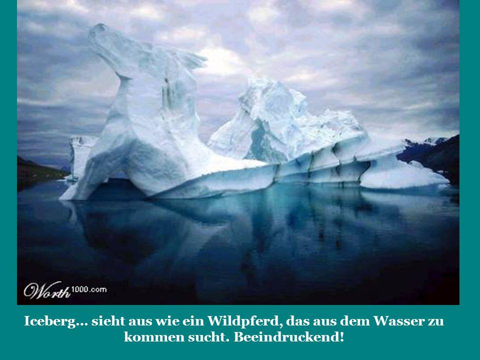 Iceberg… sieht aus wie ein Wildpferd, das aus dem Wasser zu kommen sucht. Beeindruckend!