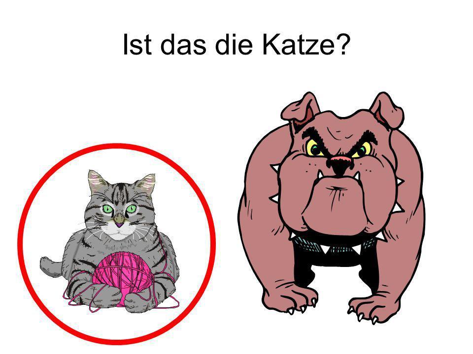 Ist das die Katze? Ja!