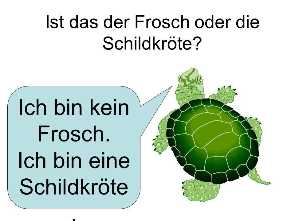 Ist das der Frosch oder die Schildkröte? Ich bin kein Frosch. Ich bin eine Schildkröte.
