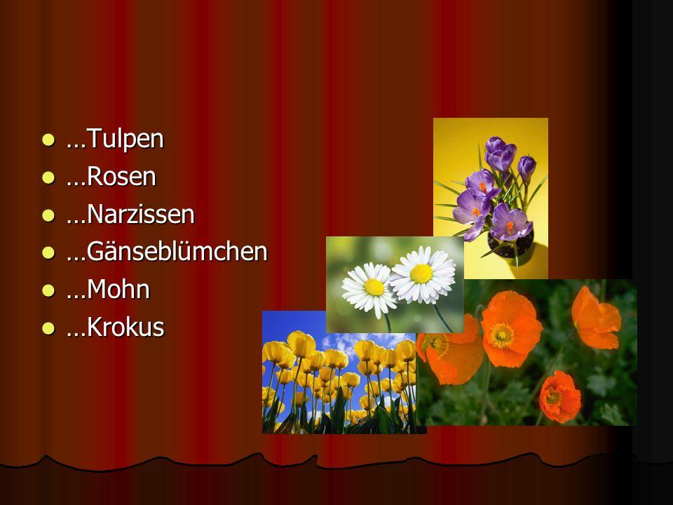 …Tulpen …Rosen …Narzissen …Gänseblümchen …Mohn …Krokus