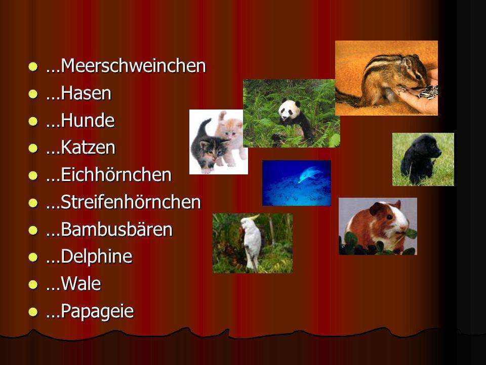 …Meerschweinchen …Hasen …Hunde …Katzen …Eichhörnchen …Streifenhörnchen …Bambusbären …Delphine …Wale …Papageie