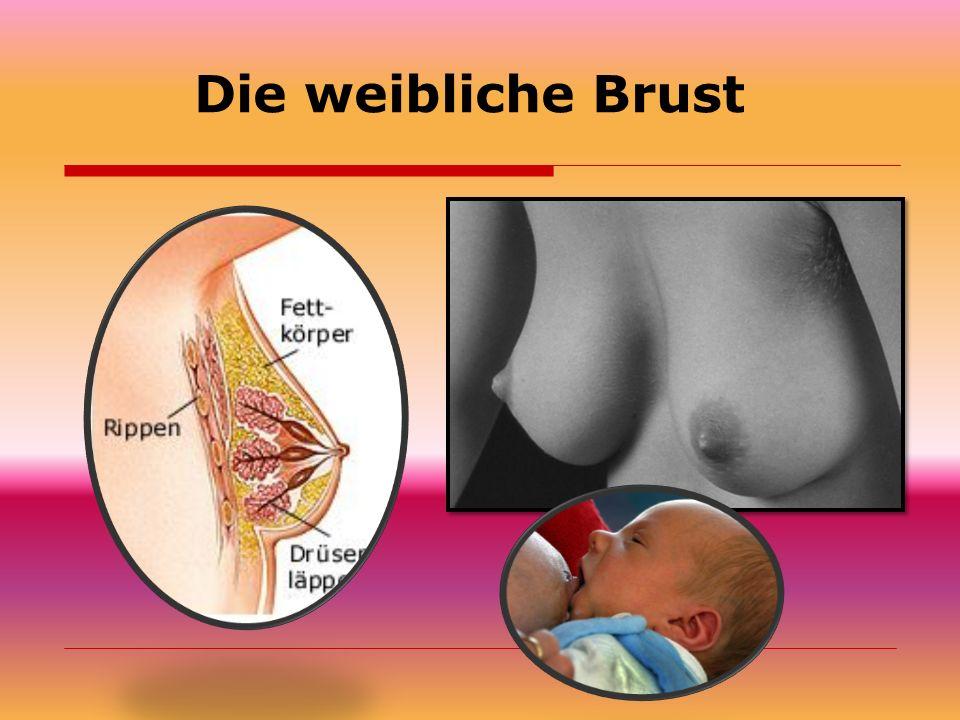 Die weibliche Brust