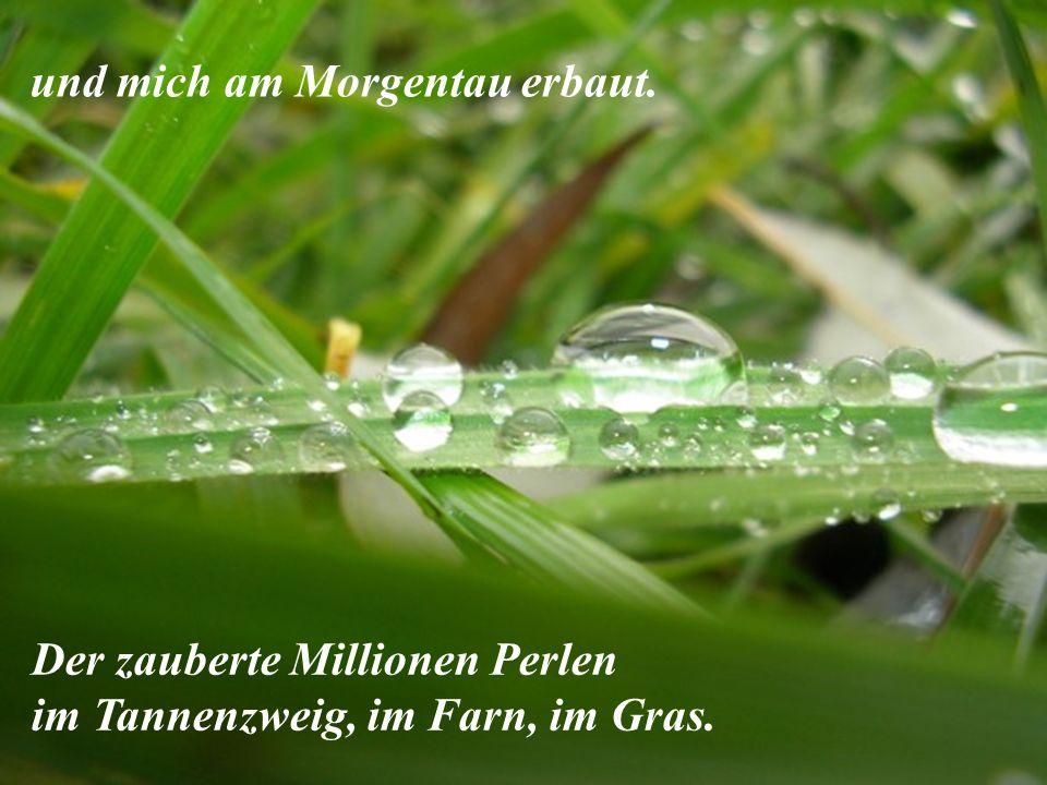 Der zauberte Millionen Perlen im Tannenzweig, im Farn, im Gras. und mich am Morgentau erbaut.