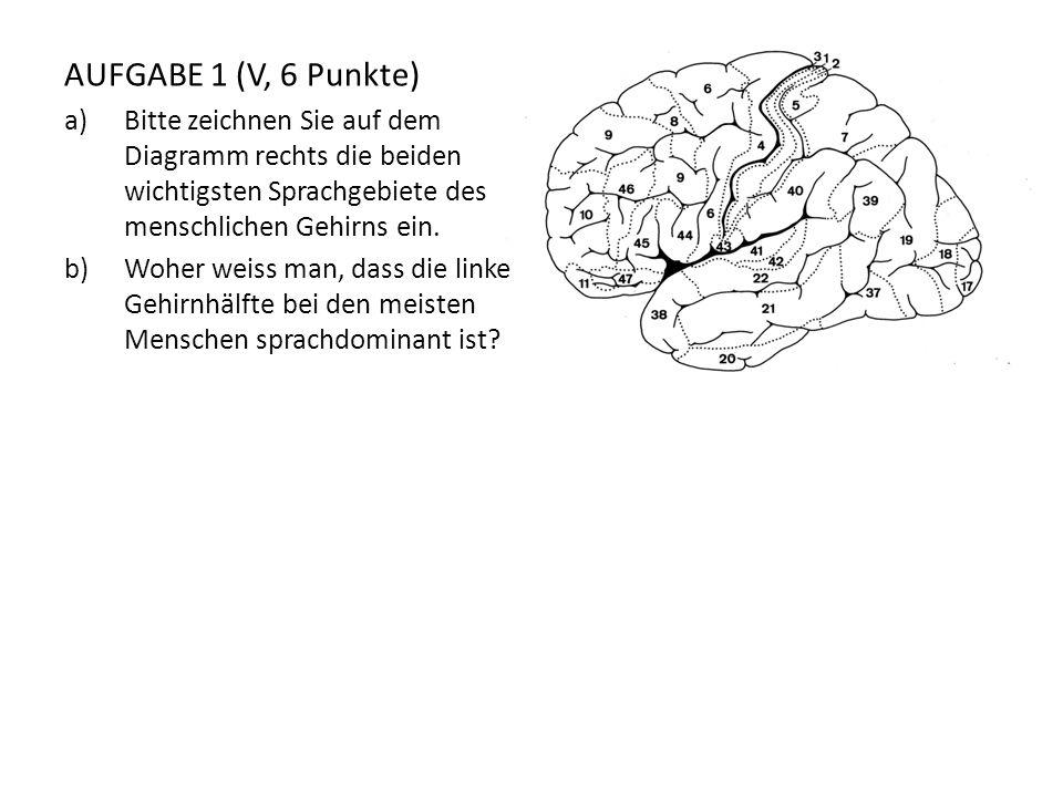 AUFGABE 1 (V, 6 Punkte) a)Bitte zeichnen Sie auf dem Diagramm rechts die beiden wichtigsten Sprachgebiete des menschlichen Gehirns ein. b)Woher weiss