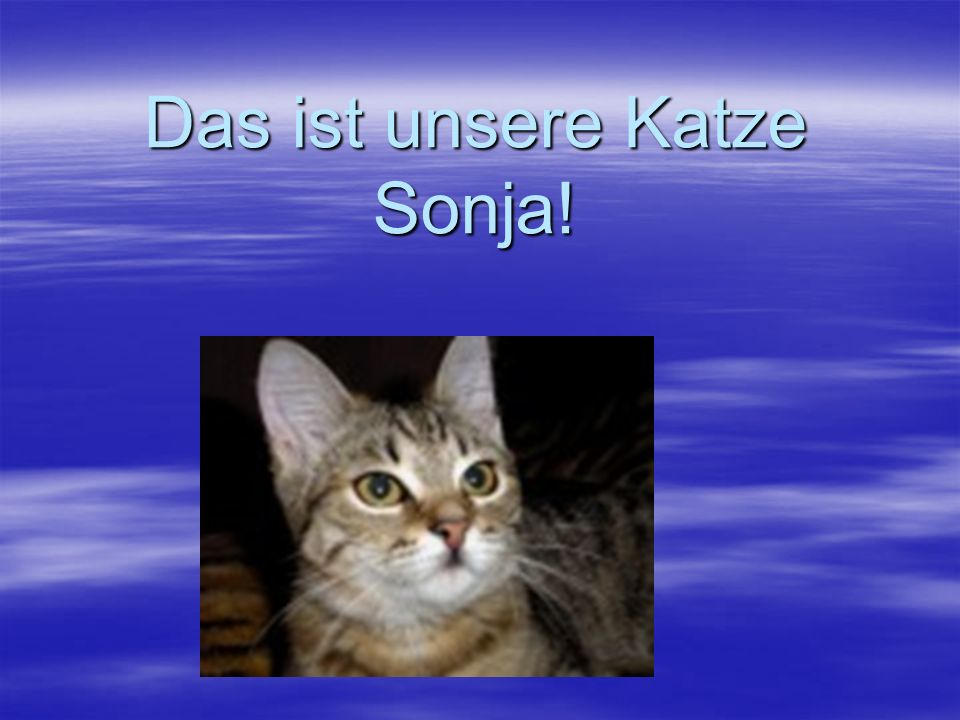 Das ist unsere Katze Sonja!