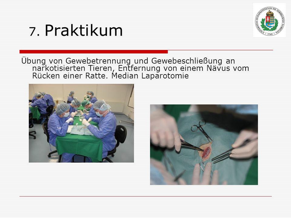 7. Praktikum Übung von Gewebetrennung und Gewebeschließung an narkotisierten Tieren, Entfernung von einem Nävus vom Rücken einer Ratte. Median Laparot