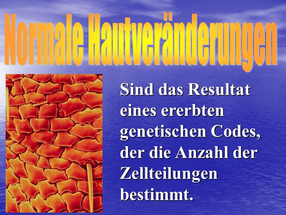 Sind das Resultat eines ererbten genetischen Codes, der die Anzahl der Zellteilungen bestimmt.