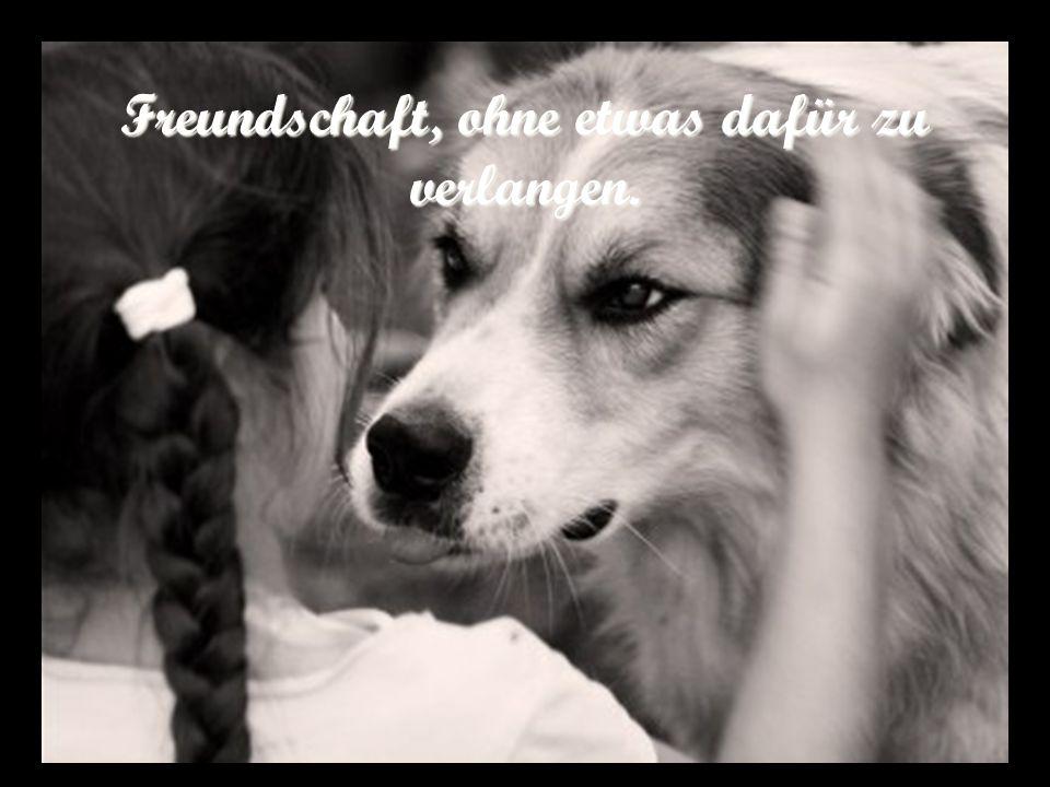 Freundschaft, ohne etwas dafür zu verlangen.