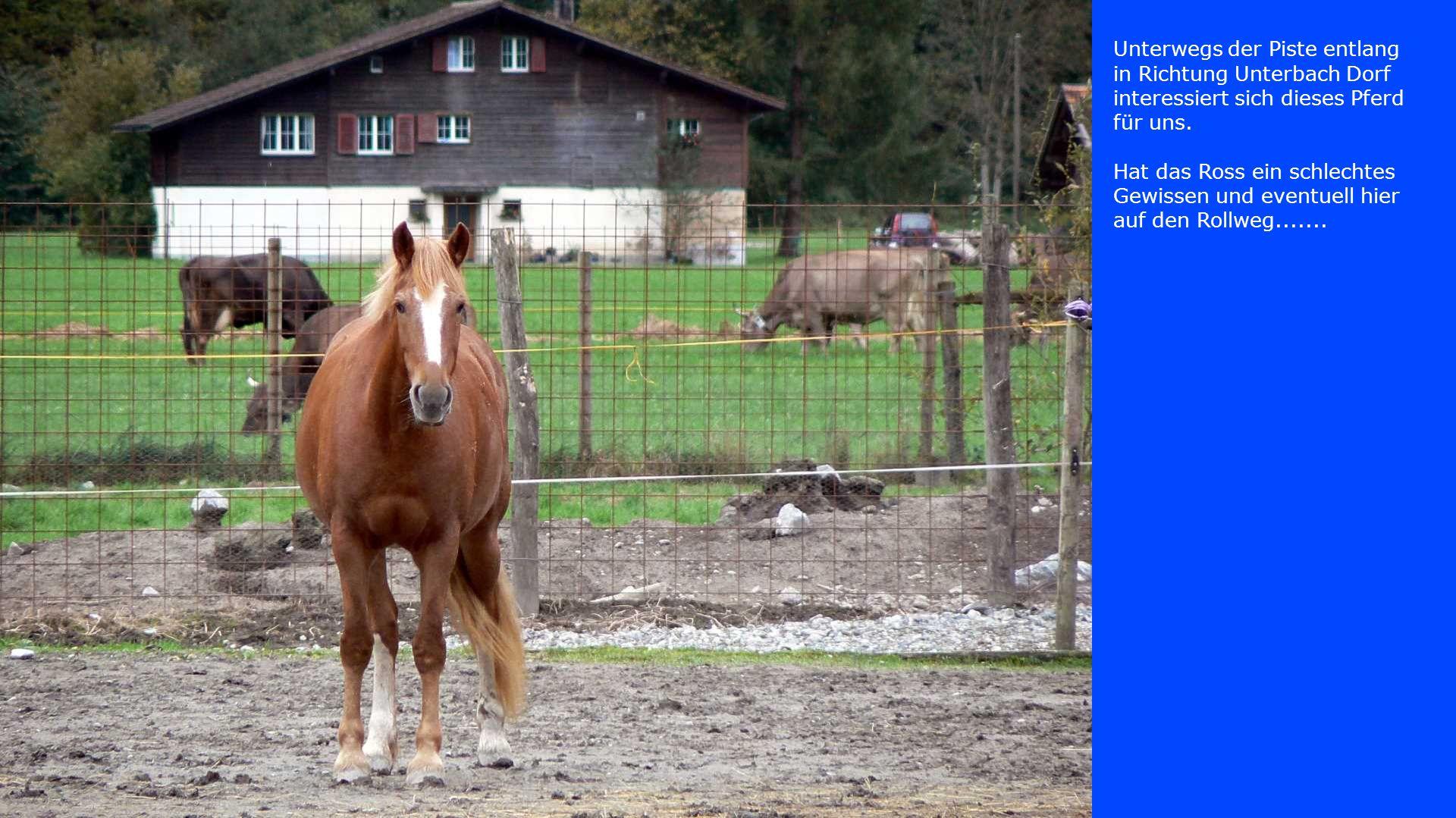 Unterwegs der Piste entlang in Richtung Unterbach Dorf interessiert sich dieses Pferd für uns. Hat das Ross ein schlechtes Gewissen und eventuell hier