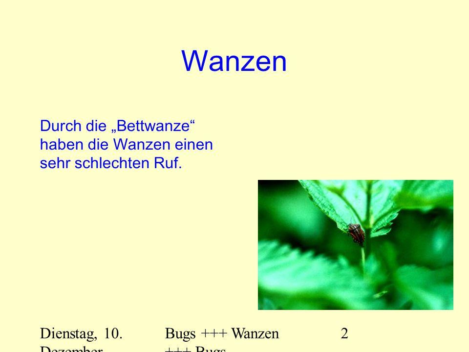 Dienstag, 10. Dezember 2013 Bugs +++ Wanzen +++ Bugs 2 Wanzen Durch die Bettwanze haben die Wanzen einen sehr schlechten Ruf.